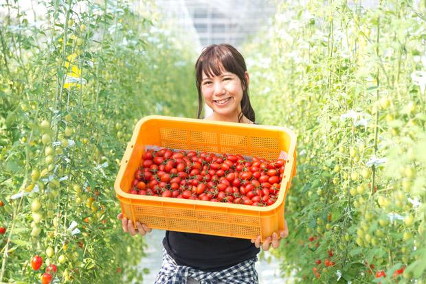 フルーツトマトを生産する三浦綾佳さん